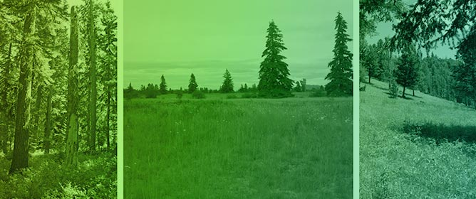Discovering Douglas-Fir Woodlands in Historical Forests