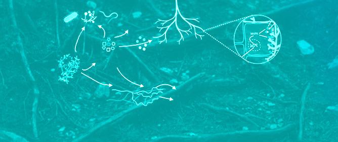 Deciphering <em>Trichoderma</em>&ndash;Plant&ndash;Pathogen Interactions for Better Development of Biocontrol Applications