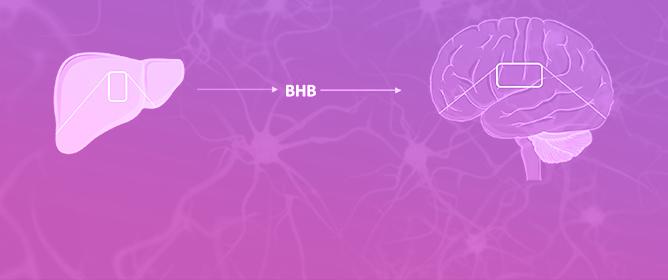 Effects of Ketone Bodies on Brain Metabolism and Function in Neurodegenerative Diseases