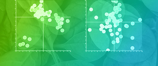 Detecting Toxigenic <em>E. coli</em> in Leafy Greens