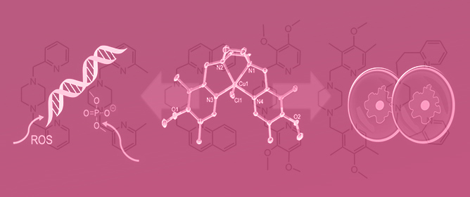Copper(II) Complexes with Tetradentate Piperazine-Based Ligands: DNA Cleavage and Cytotoxicity