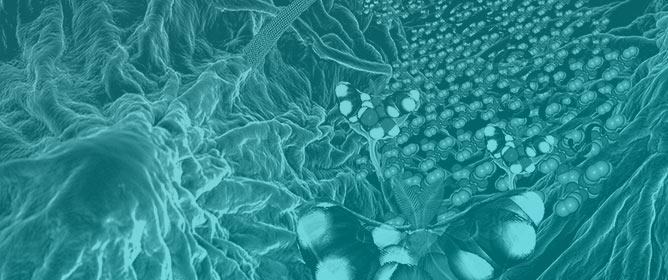 Supramolecular Fractal Growth of Self-Assembled Fibrillar Networks