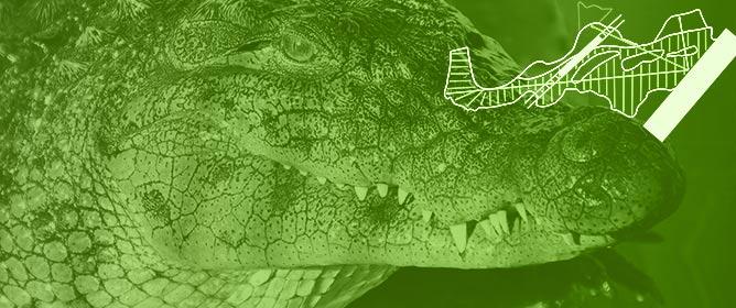 Evaluating the Effect of Visitor Presence on Nile Crocodile (<em>Crocodylus niloticus</em>) Behavior