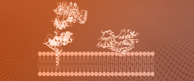 Peripheral Membrane Proteins: Promising Therapeutic Targets across Domains of Life