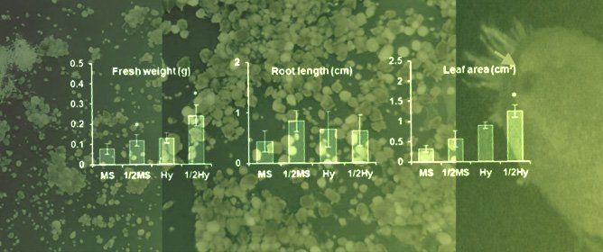 Effects of Different Growth Media on In Vitro Seedling Development of an Endangered Orchid Species <em>Sedirea japonica</em>