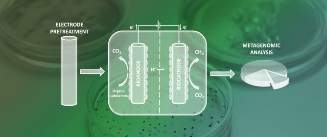 Impact of Carbon Felt Electrode Pretreatment on Anodic Biofilm Composition in Microbial Electrolysis Cells