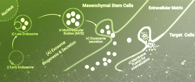 MSC-Exosomes as an Emerging Paradigm for Regenerative Therapy and Nano-Medicine