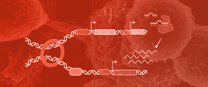 Function and Clinical Potential of Non-Coding Variants in Cancer